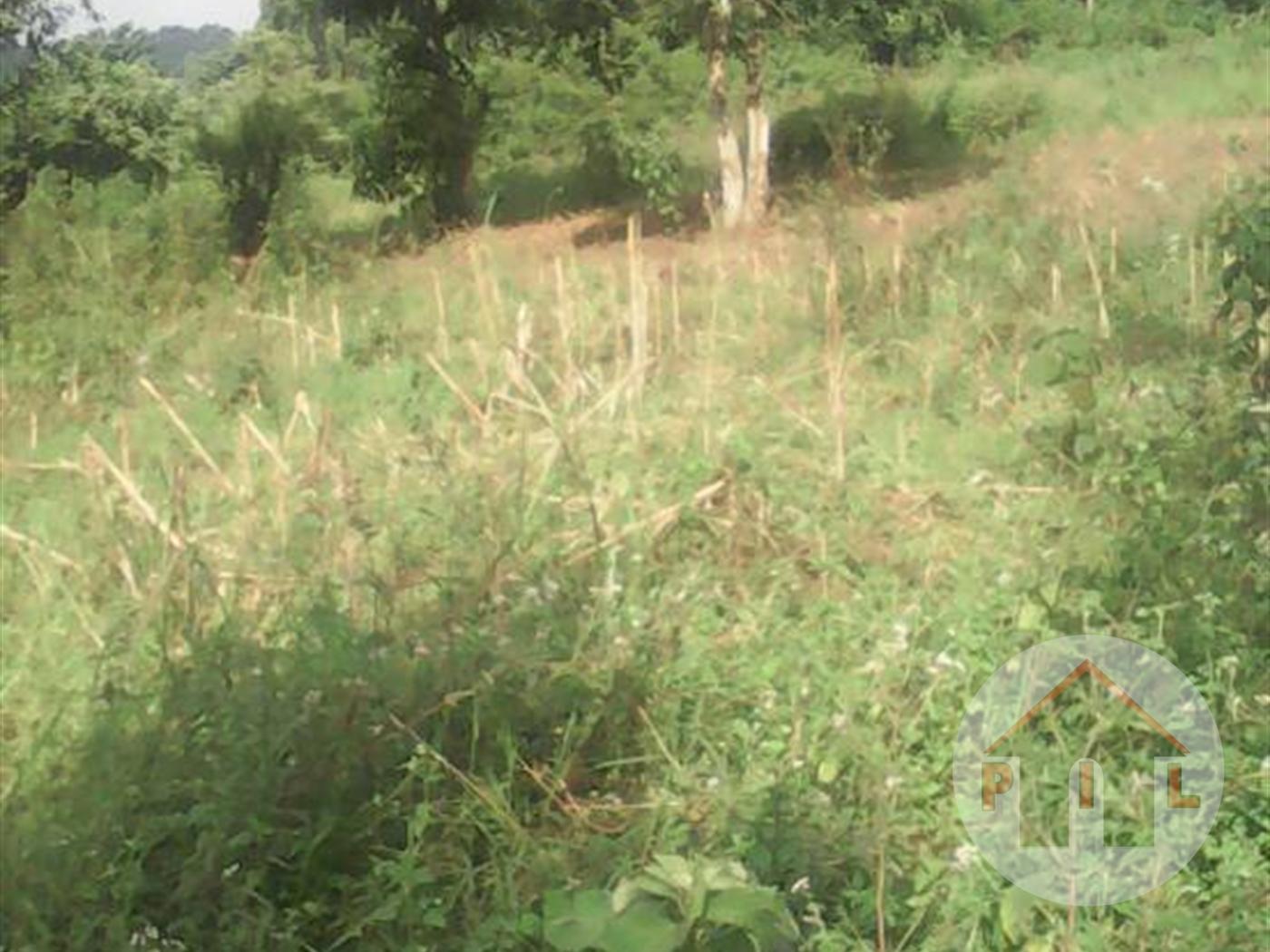 Multi Purpose Land for sale in Nangabo Wakiso