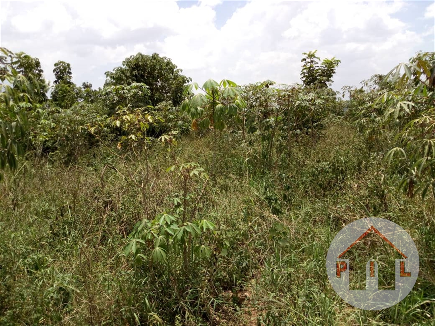 Agricultural Land for sale in Sanga Kiruhura
