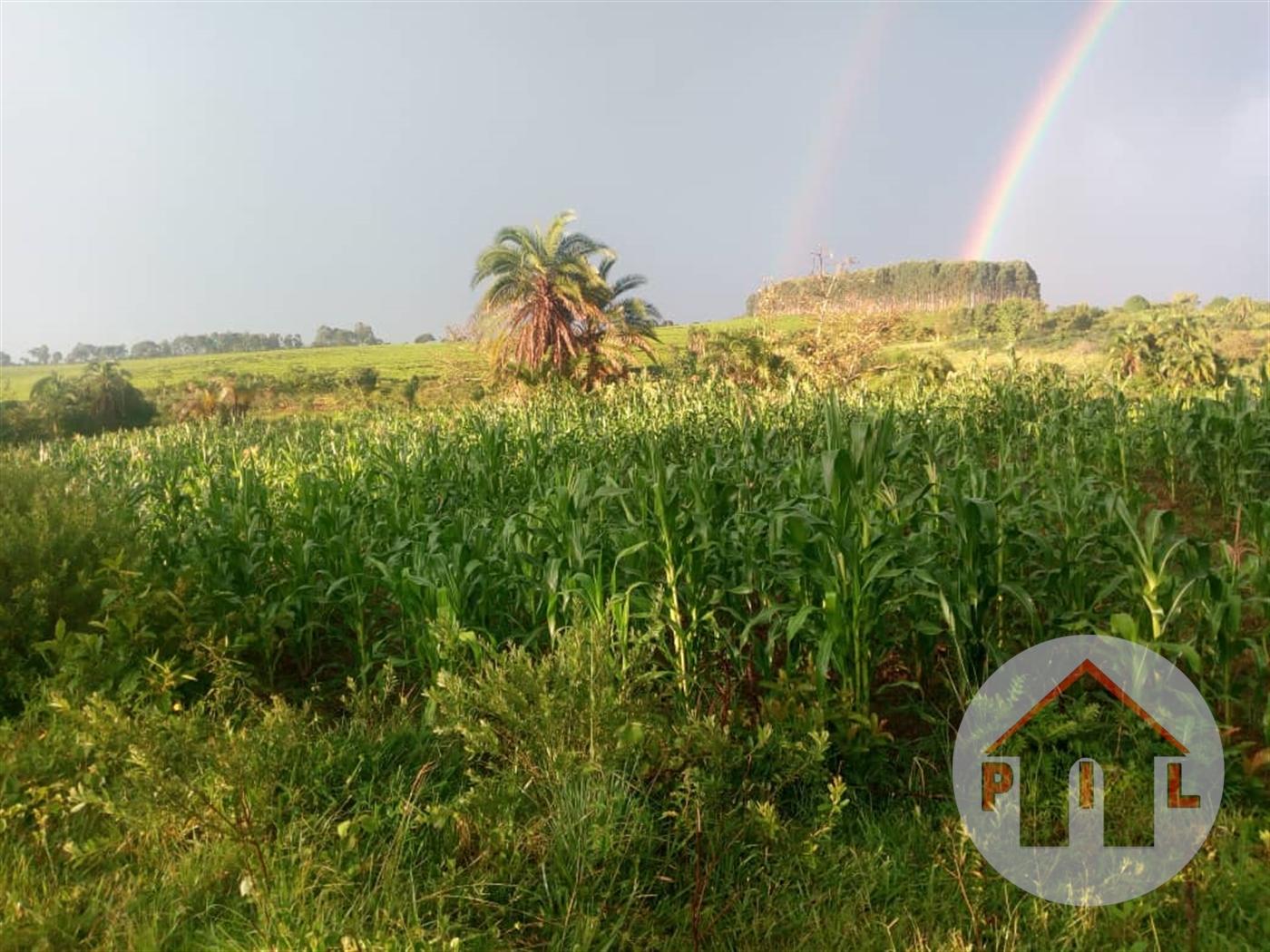 Residential Land for sale in Nakaseta Mityana