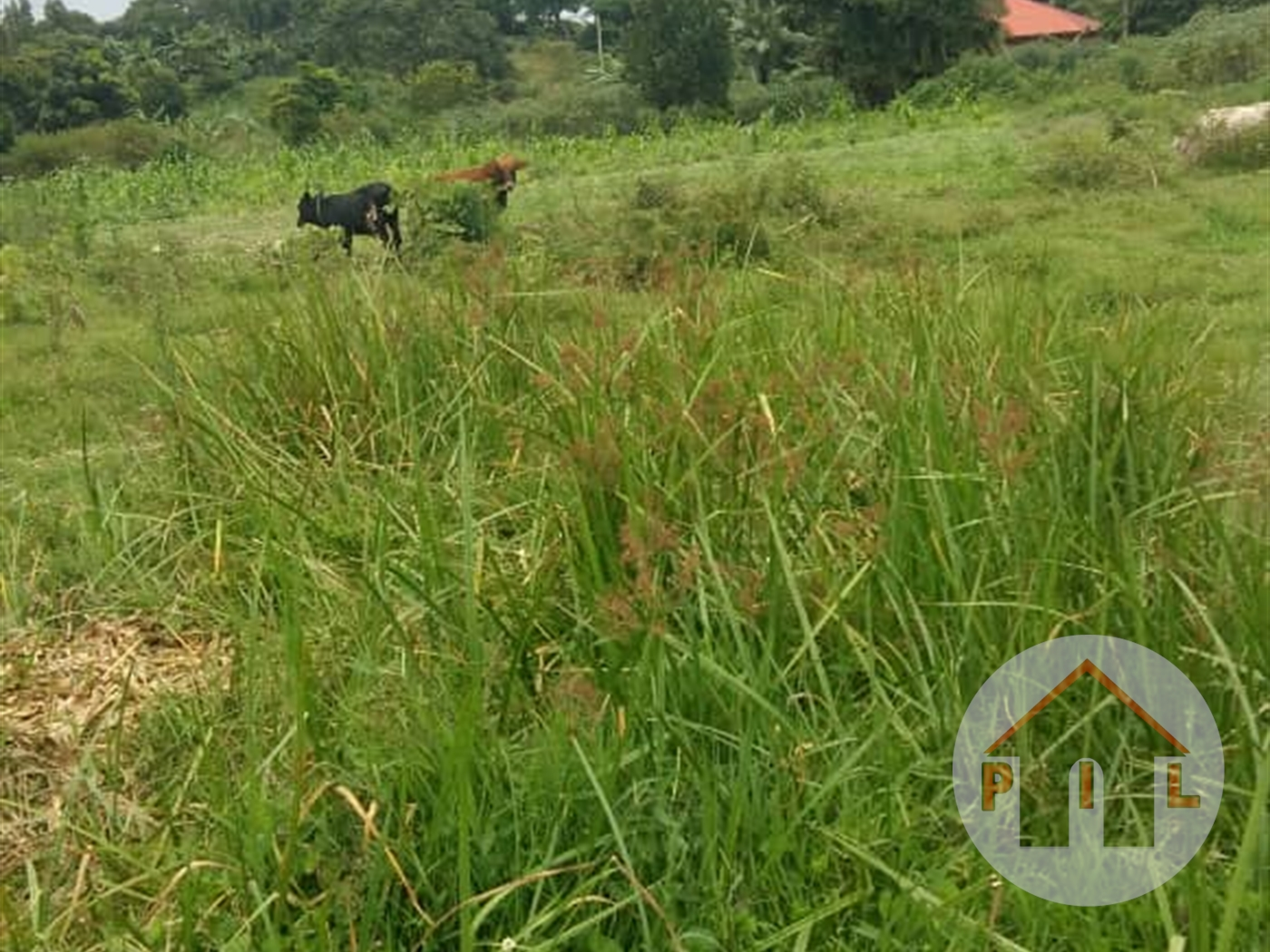 Multi Purpose Land for sale in Namanve Kampala
