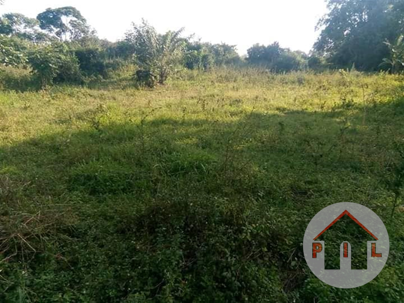 Agricultural Land for sale in Kasanda Mityana