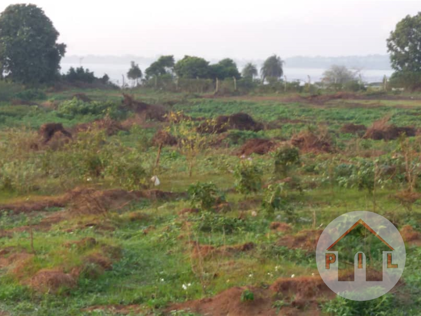 Agricultural Land for sale in Nangunga Mukono