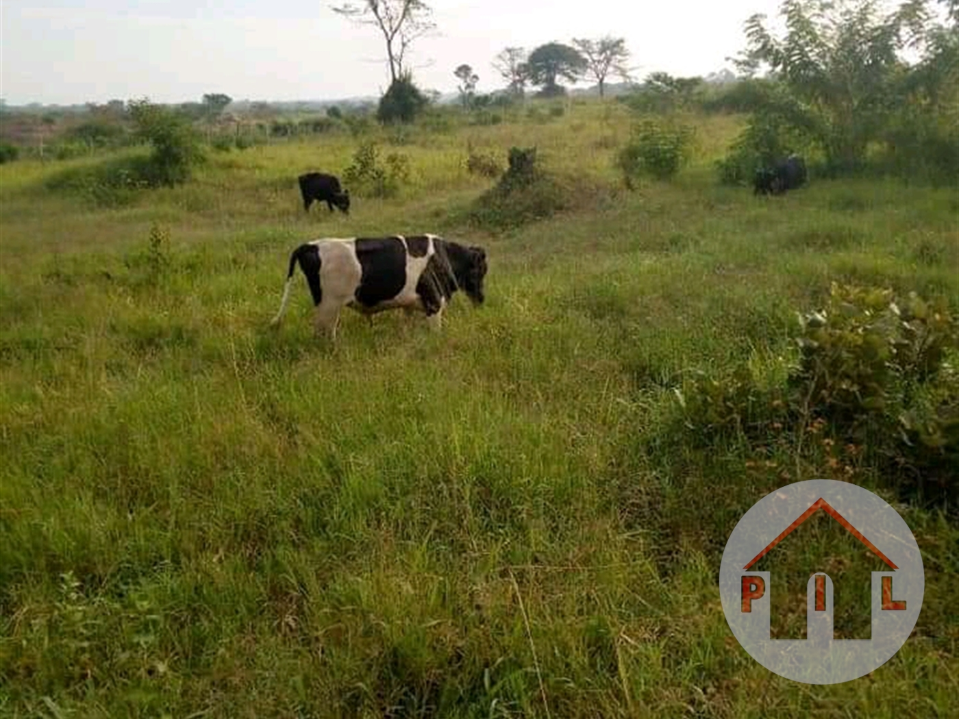 Agricultural Land for sale in Mpata Mukono