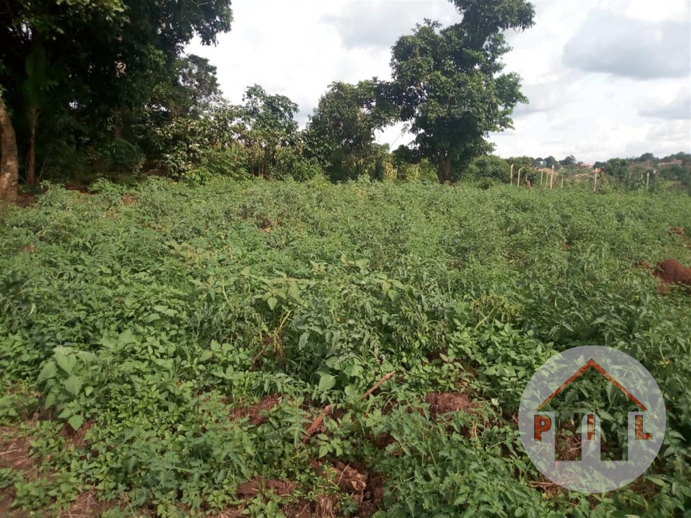 Agricultural Land for sale in Nantabulirirwa Mukono