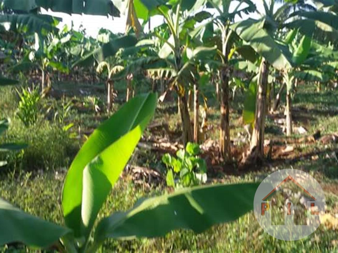 Multi Purpose Land for sale in Bugungu Mukono