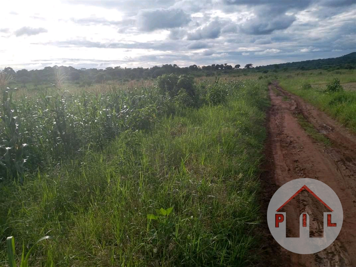 Agricultural Land for sale in Busunju Mityana
