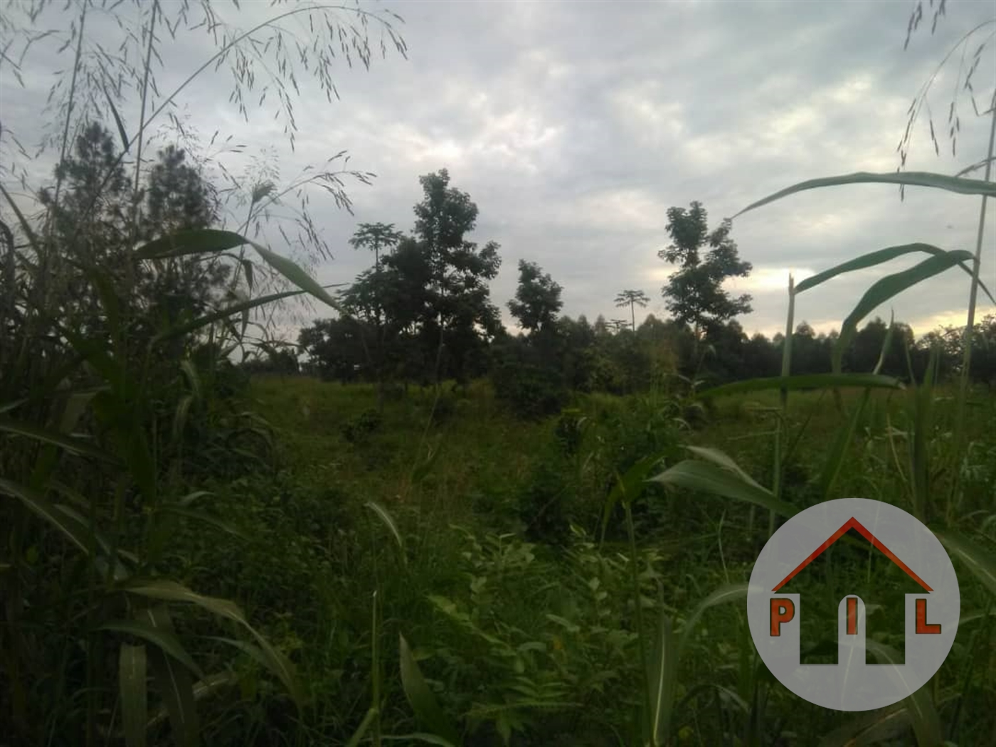 Agricultural Land for sale in Kiboga Kiboga