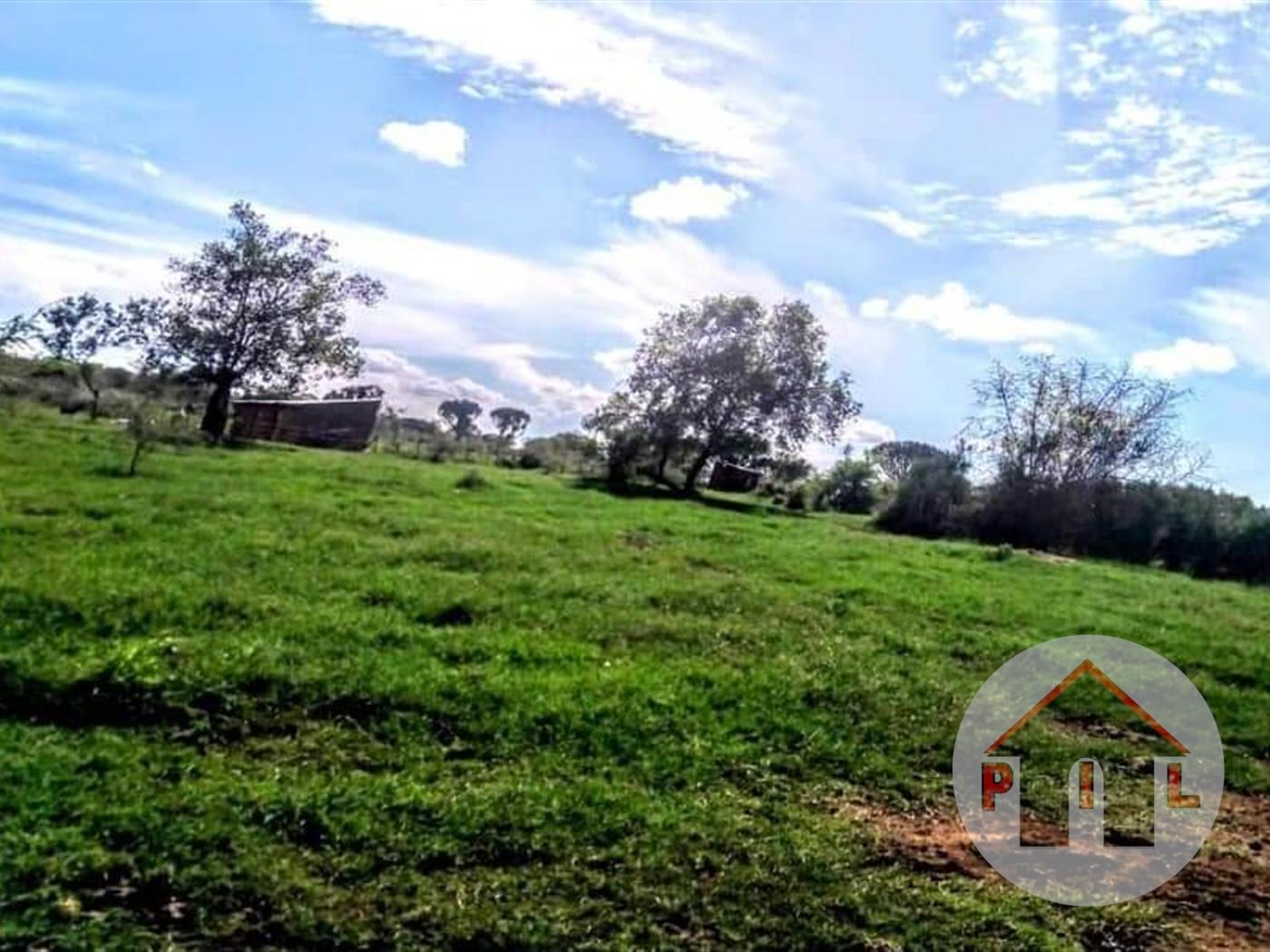 Agricultural Land for sale in Nshara Kiruhura