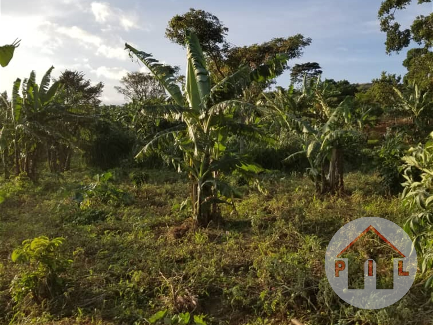 Agricultural Land for sale in Bugerere Kayunga