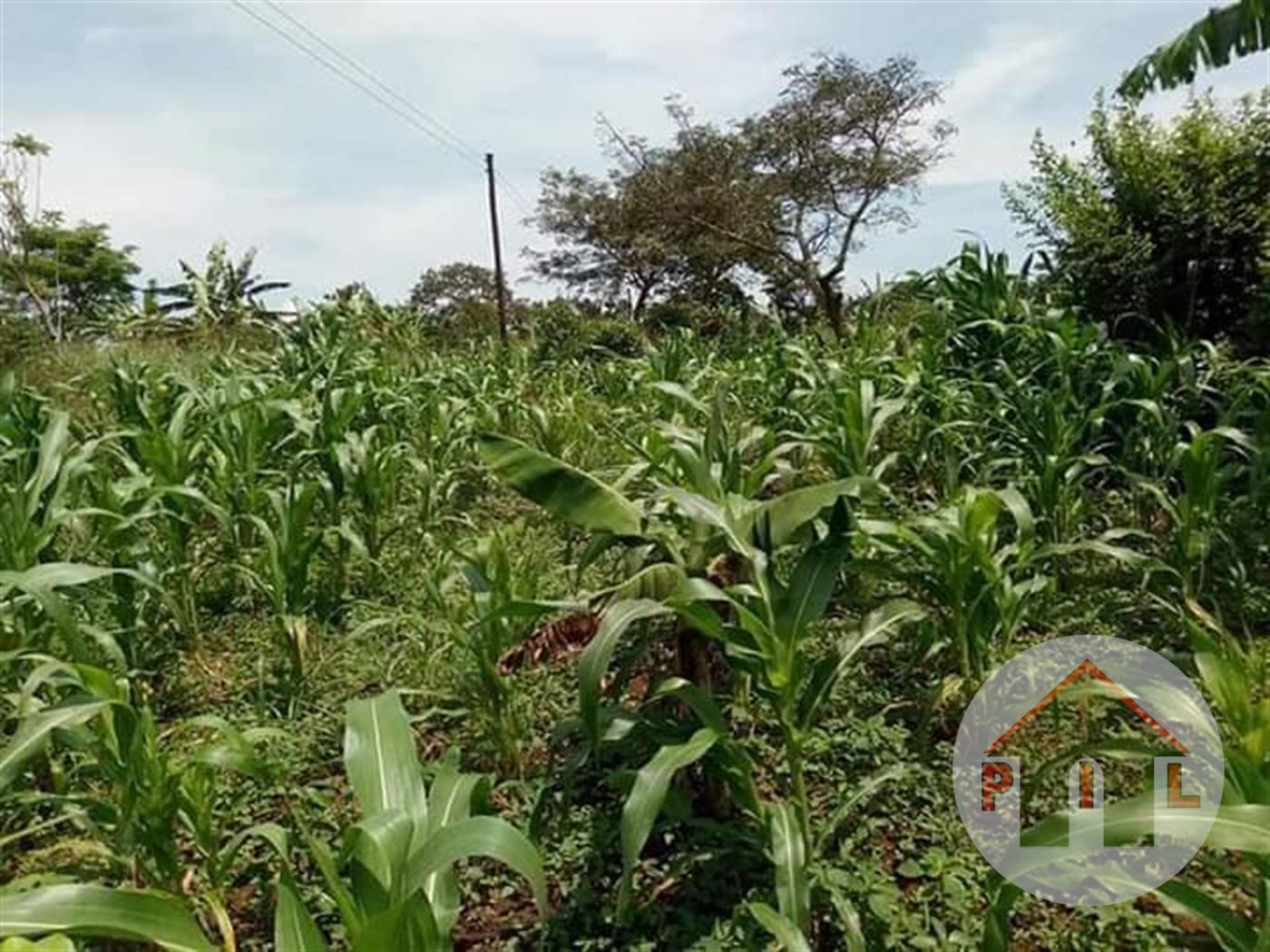 Residential Land for sale in Kayabwe Masaka