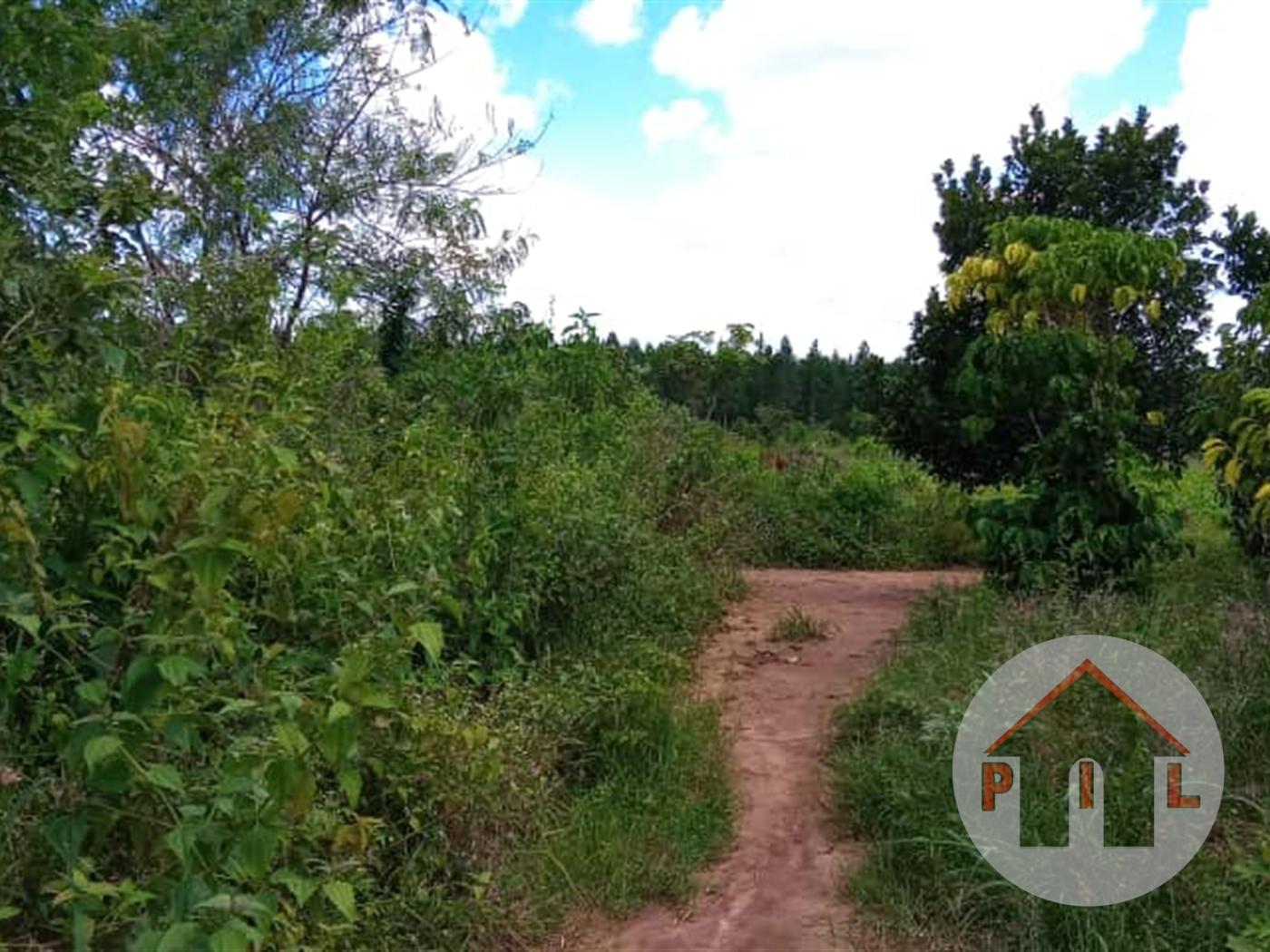 Residential Land for sale in Akright Wakiso