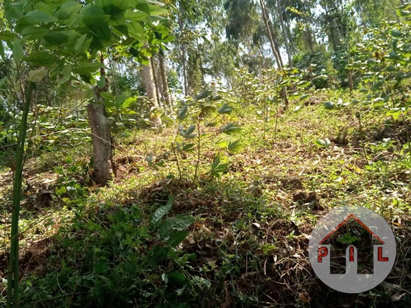 Residential Land for sale in Kikyusa Luwero