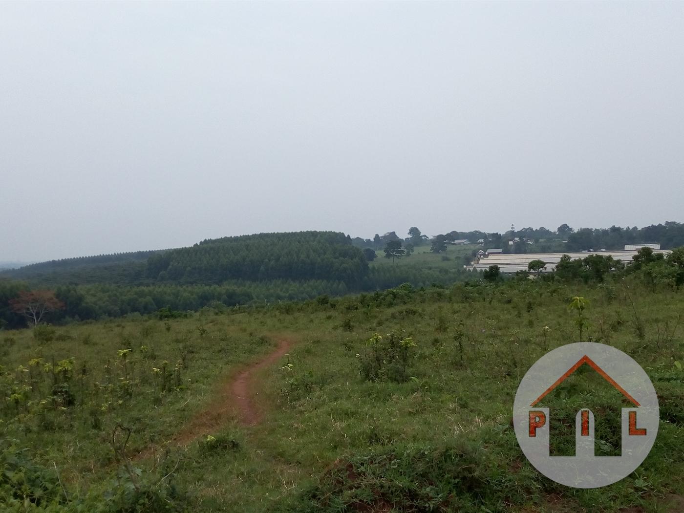 Residential Land for sale in Kisowera Mukono