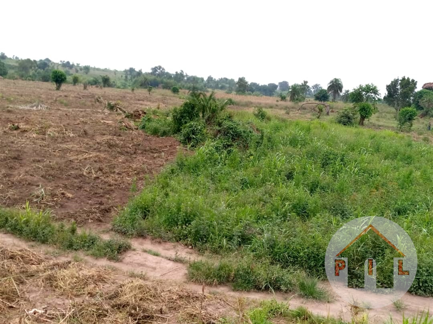 Agricultural Land for sale in Kasanda Kiboga