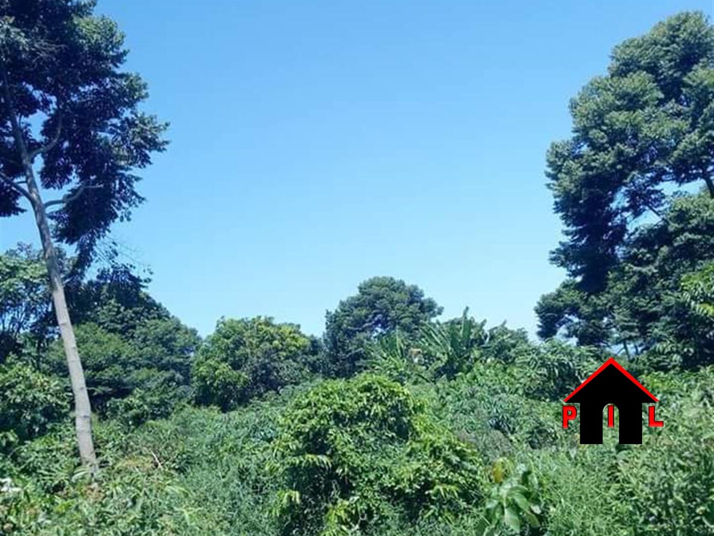 Agricultural Land for sale in Nkokonjeru Bukwa