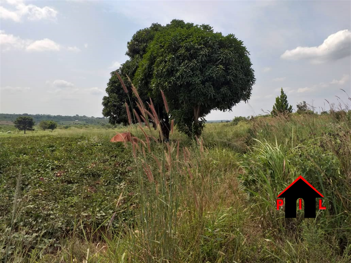 Agricultural Land for sale in Zirobwe Wakiso