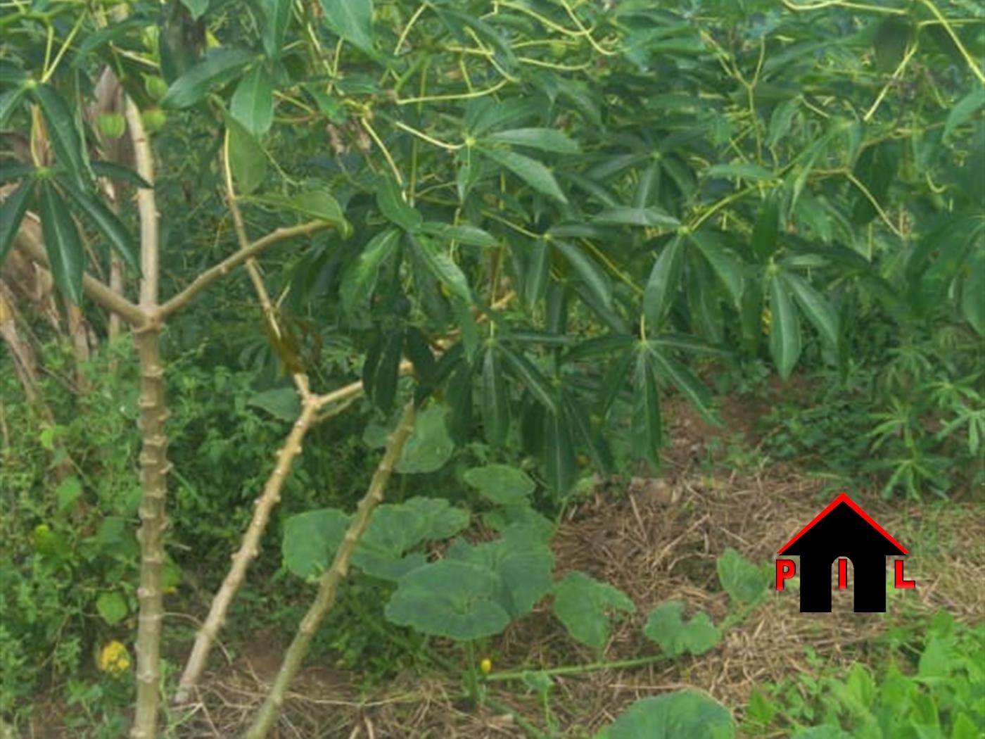 Agricultural Land for sale in Kyamutakasa Nakaseke