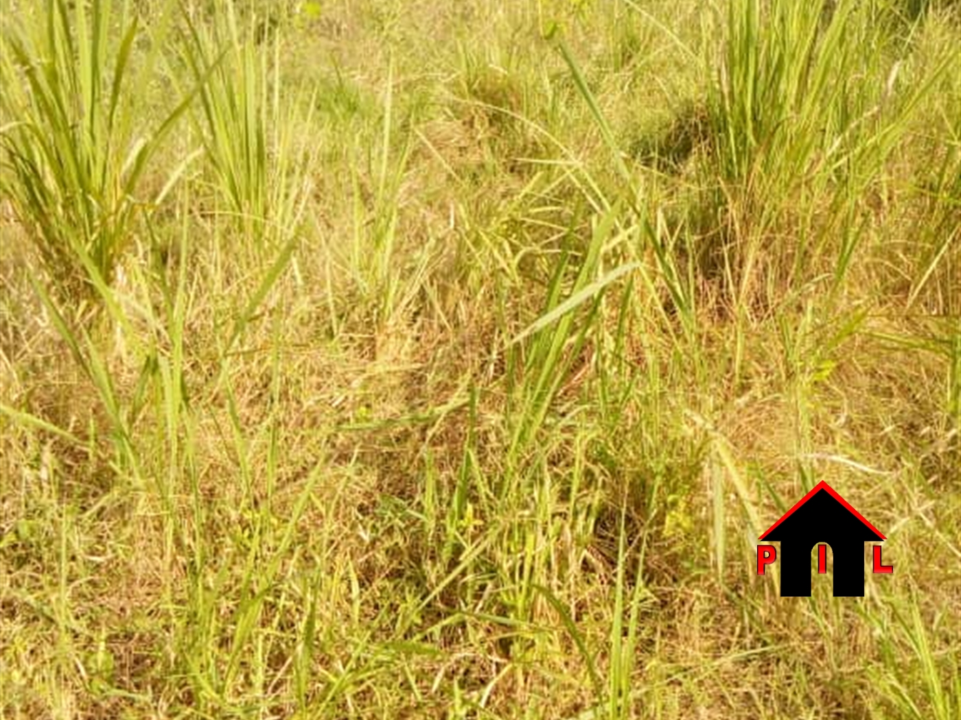 Residential Land for sale in Kungu Mpigi