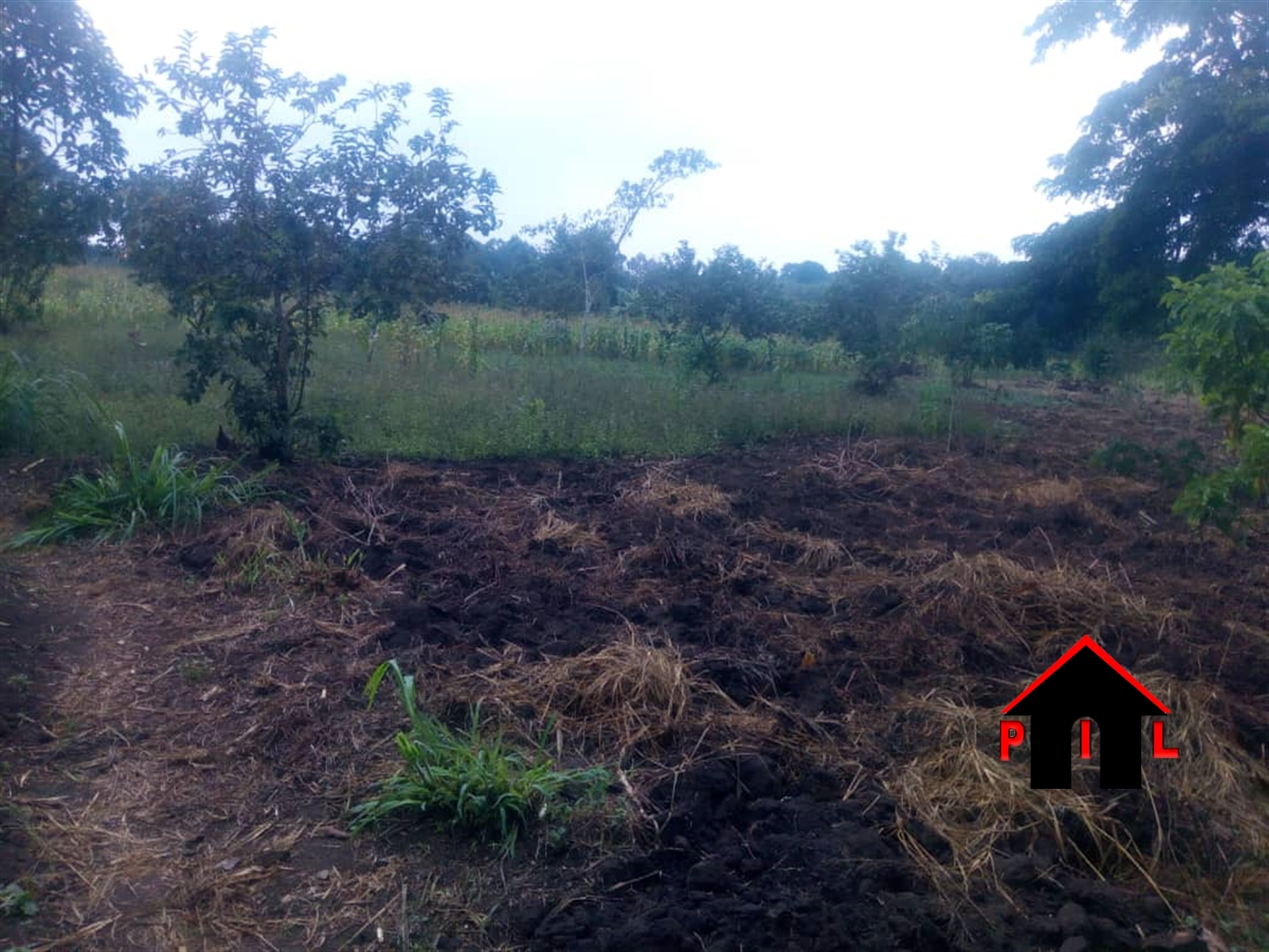 Agricultural Land for sale in Miseebe Mityana