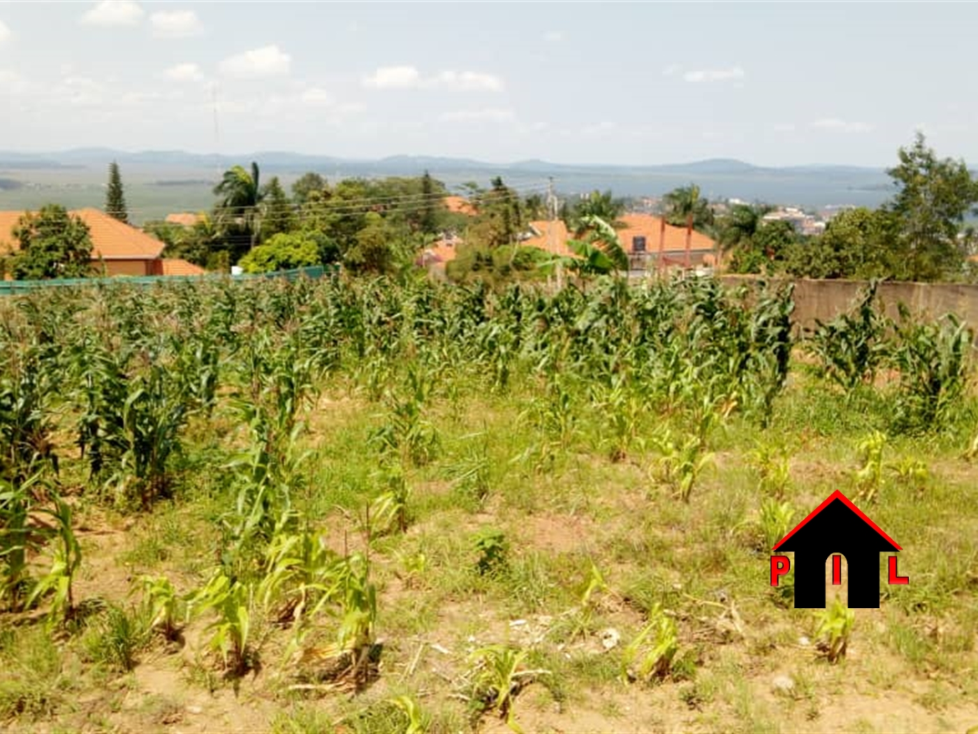 Residential Land for sale in Namulonge Wakiso