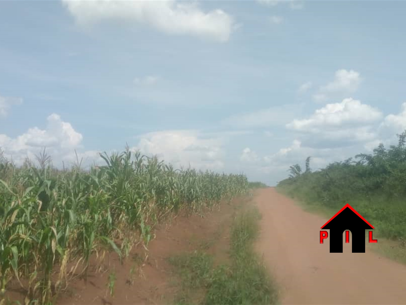 Agricultural Land for sale in Wakyato Nakaseke
