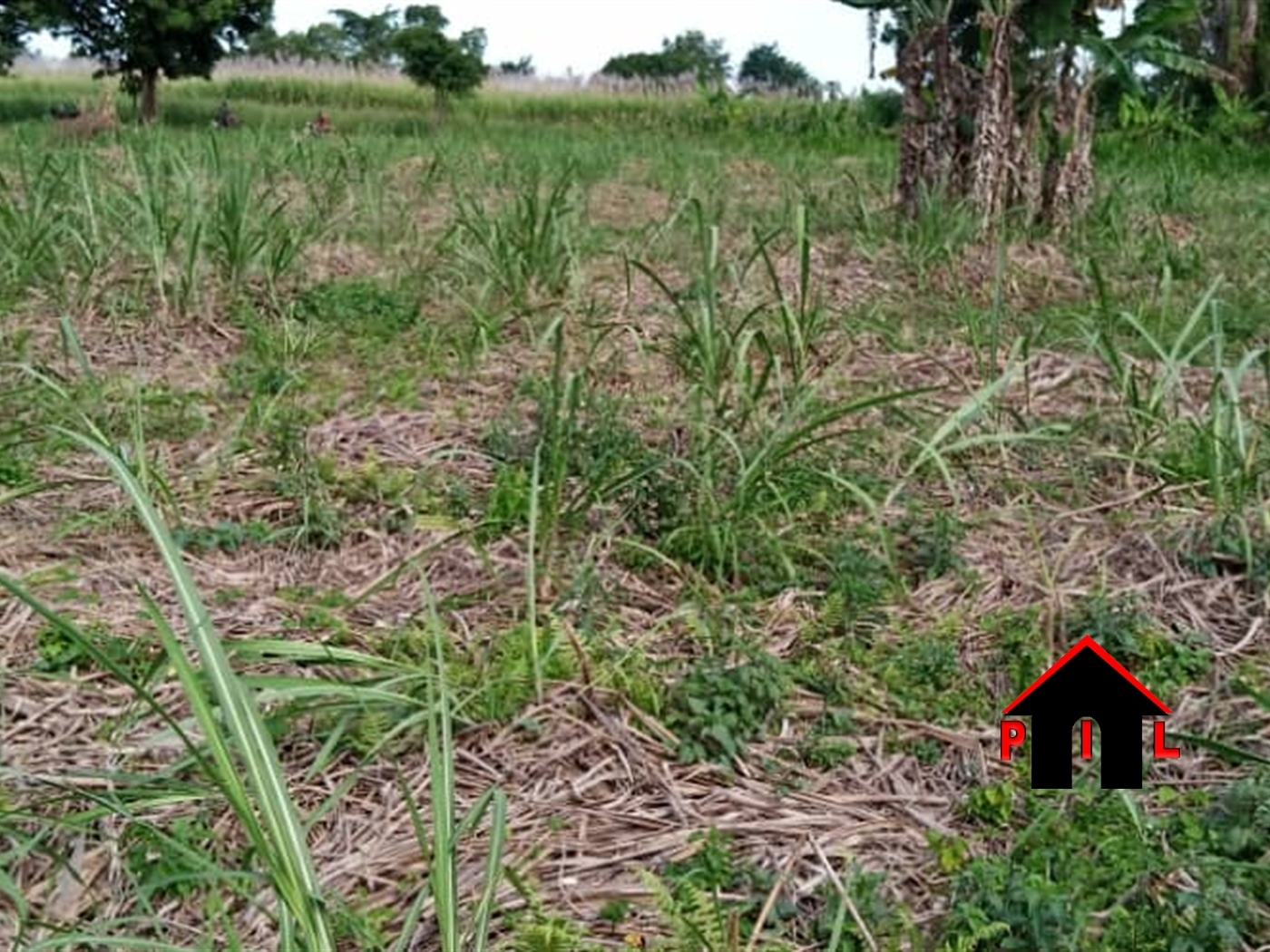 Agricultural Land for sale in Katende Wakiso