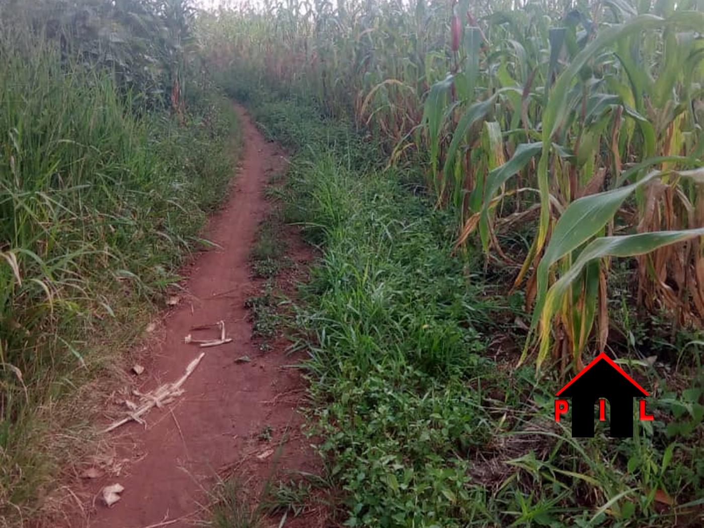 Agricultural Land for sale in Kyenda Kiboga
