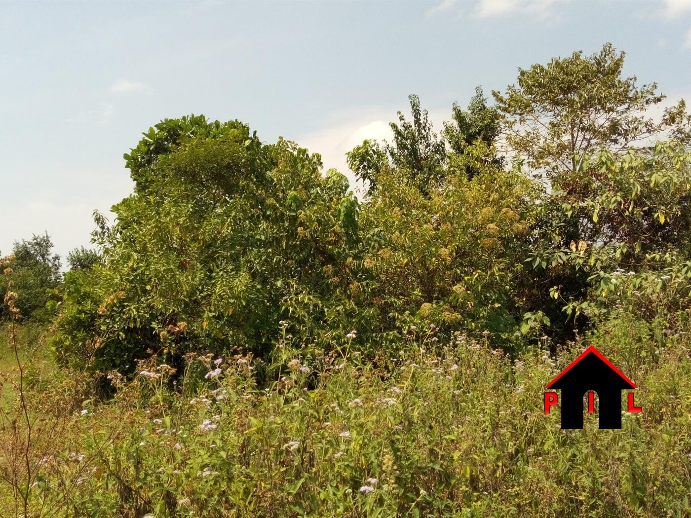 Agricultural Land for sale in Nkokonjeru Mukono