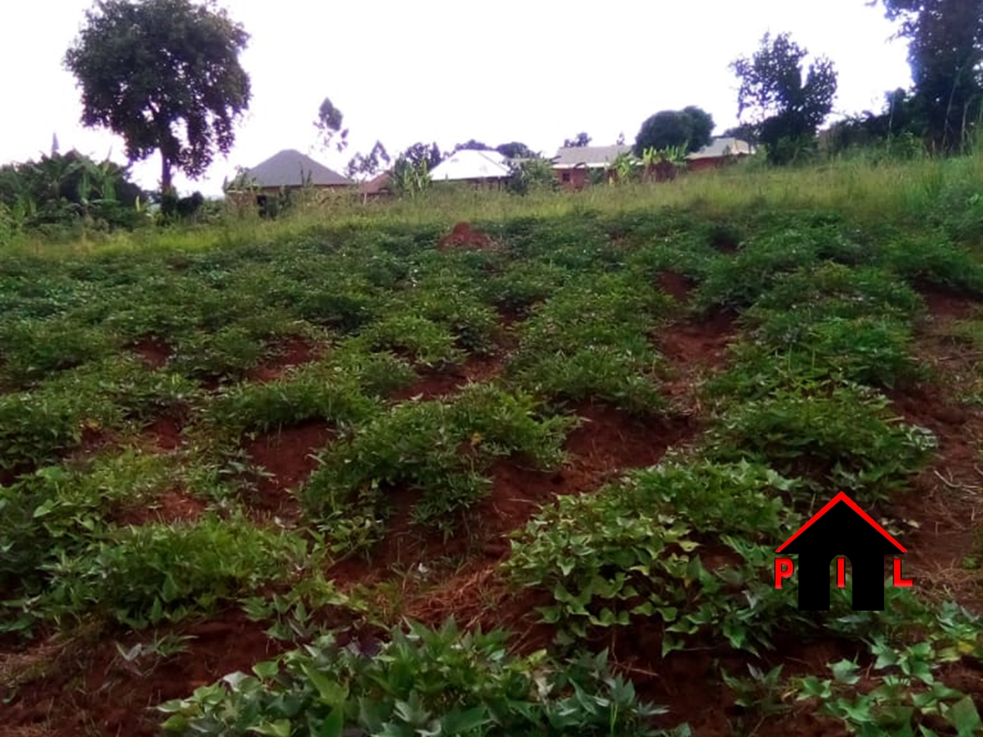 Agricultural Land for sale in Buzzi Luwero