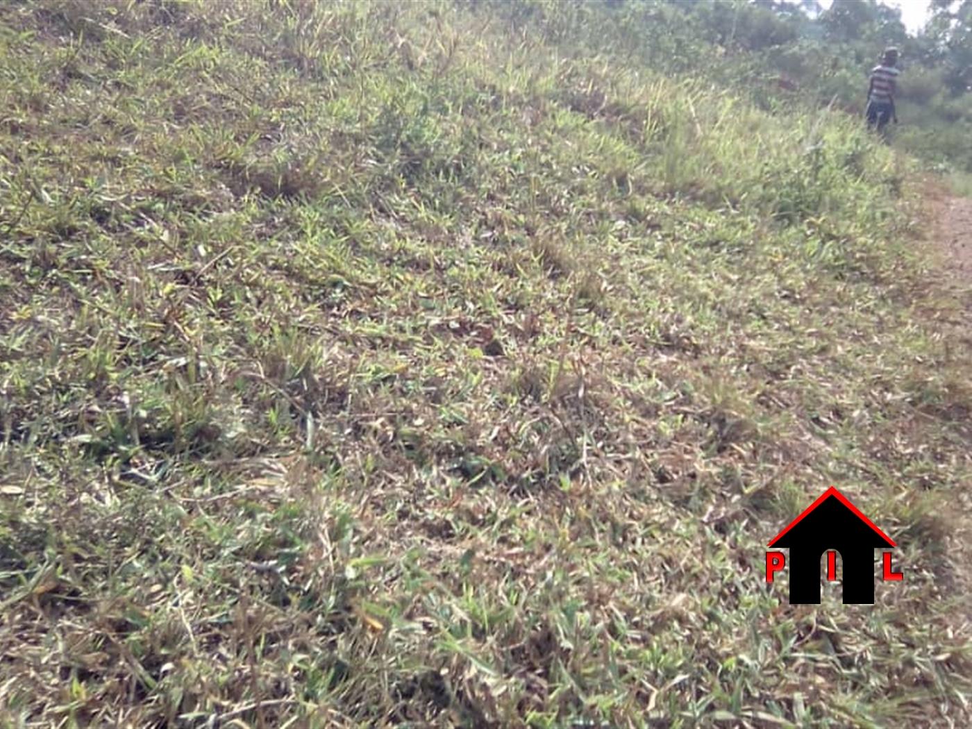 Agricultural Land for sale in Wabitungulu Luwero