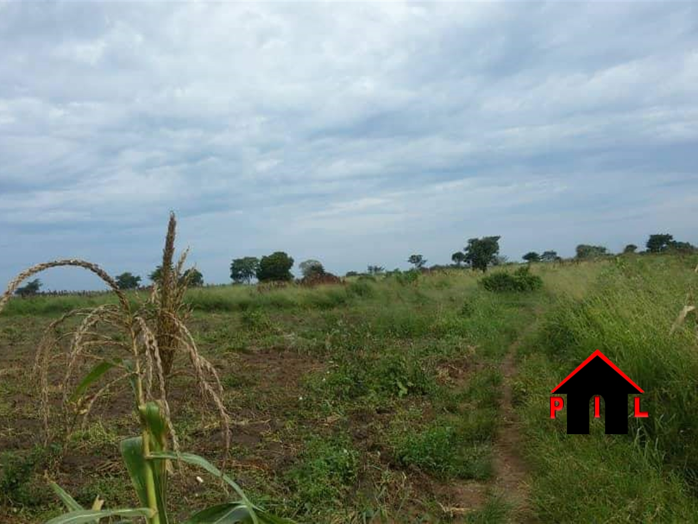 Agricultural Land for sale in Kasana Luwero