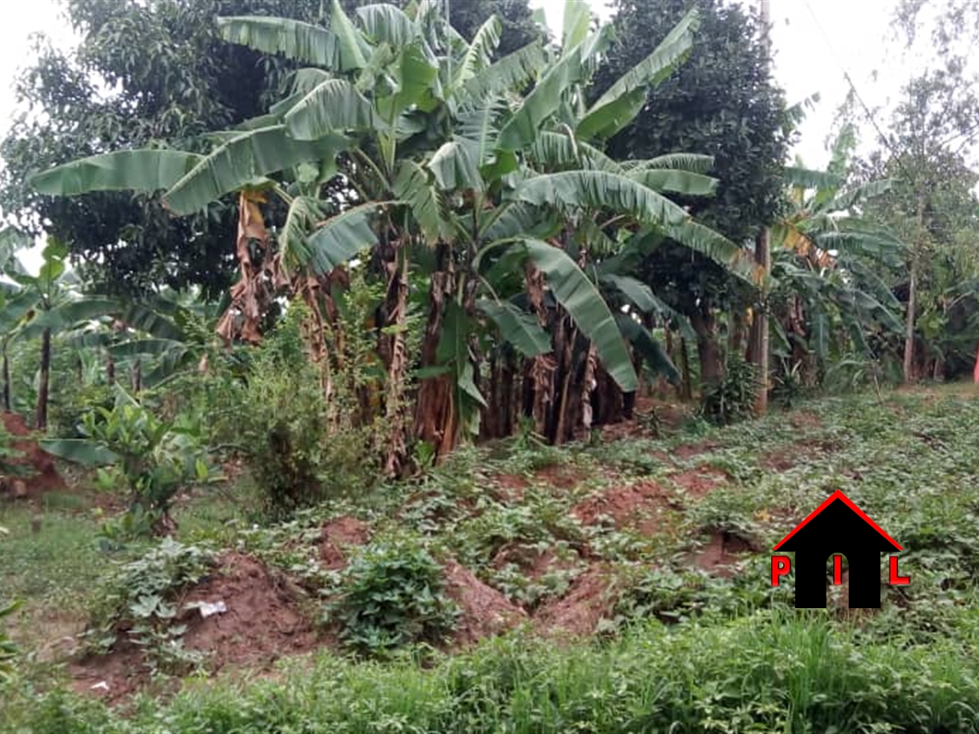 Agricultural Land for sale in Kyakwanzi Masindi