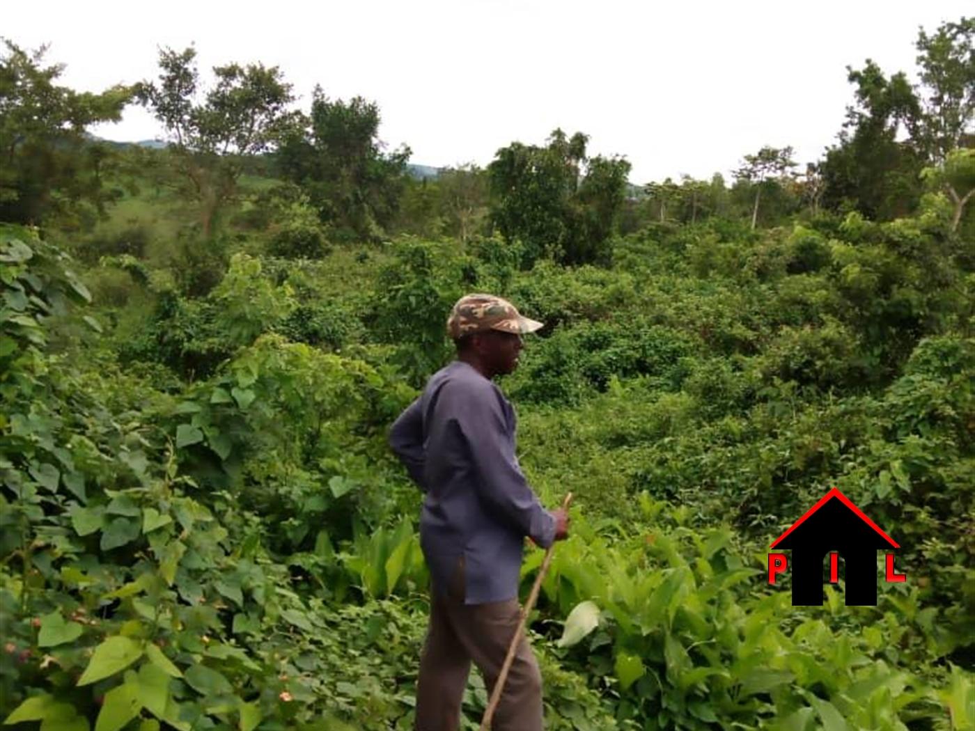 Residential Land for sale in Kikonge Mityana