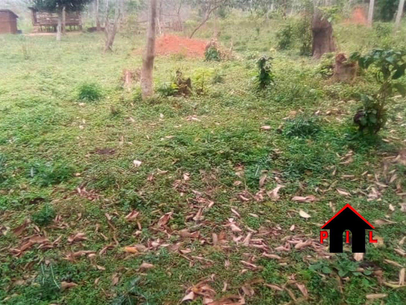Agricultural Land for sale in Tongo Luwero