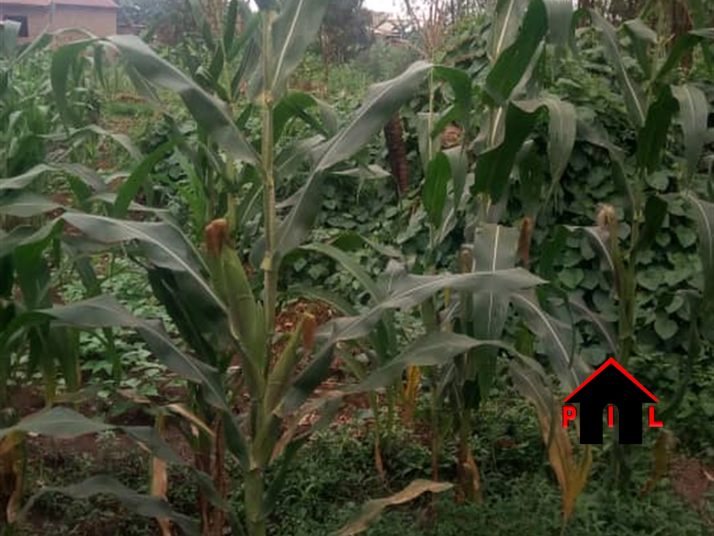 Commercial Land for sale in Buloba Wakiso