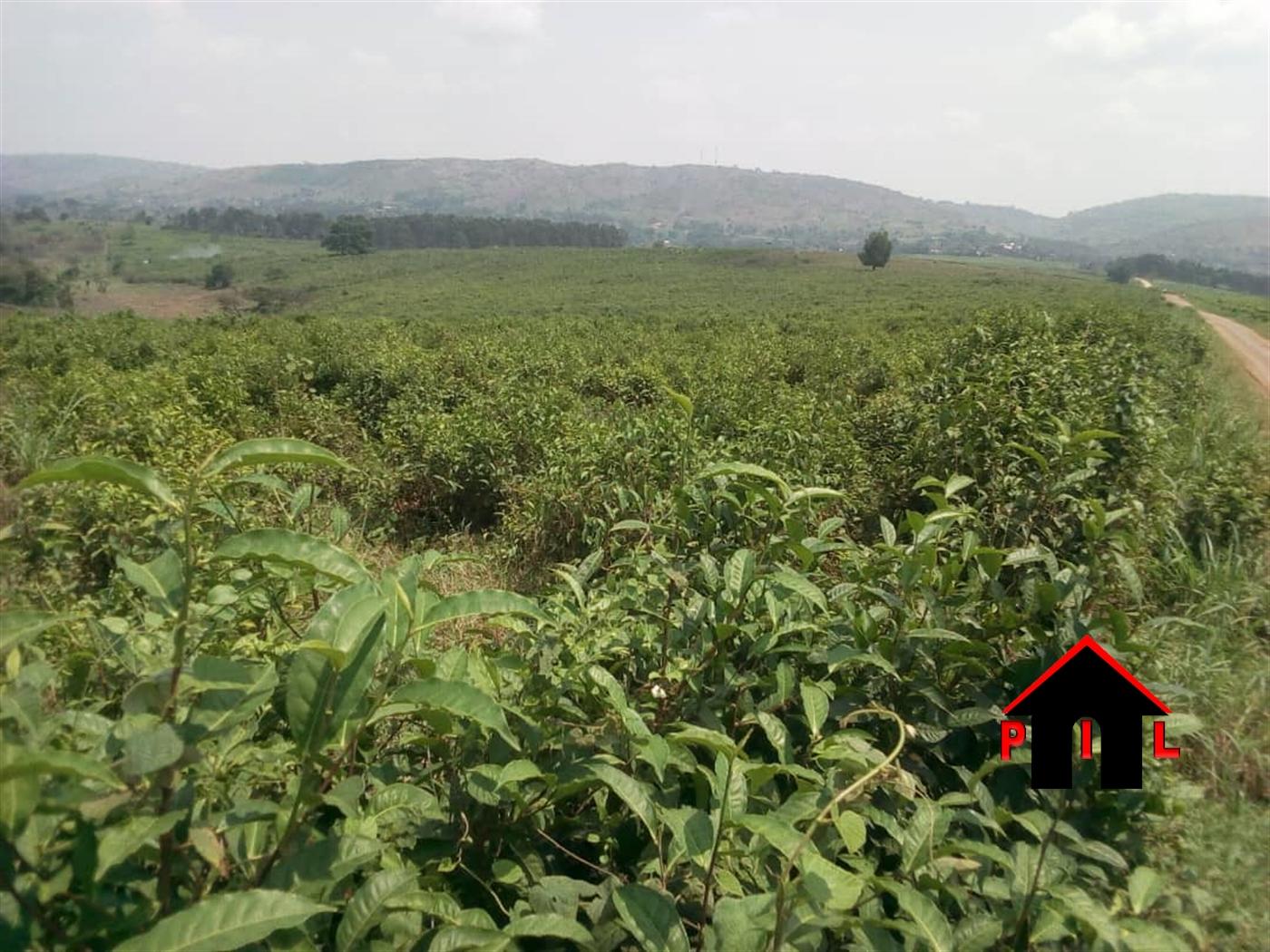 Agricultural Land for sale in Kasanda Mubende