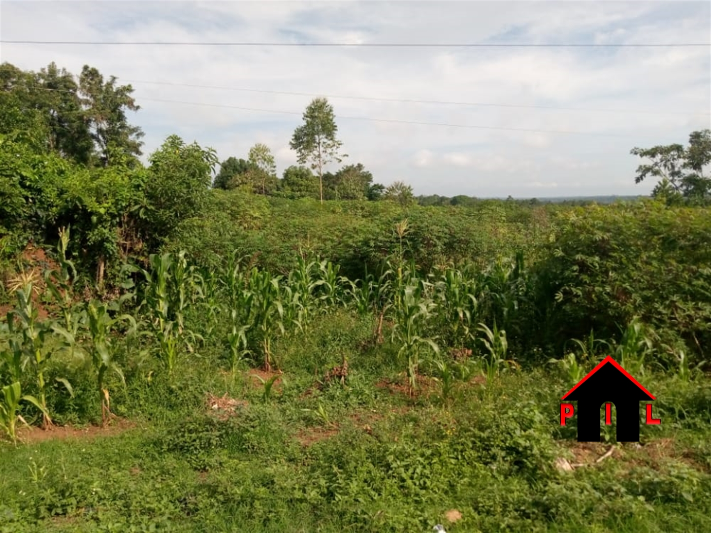 Agricultural Land for sale in Naggalama Mukono