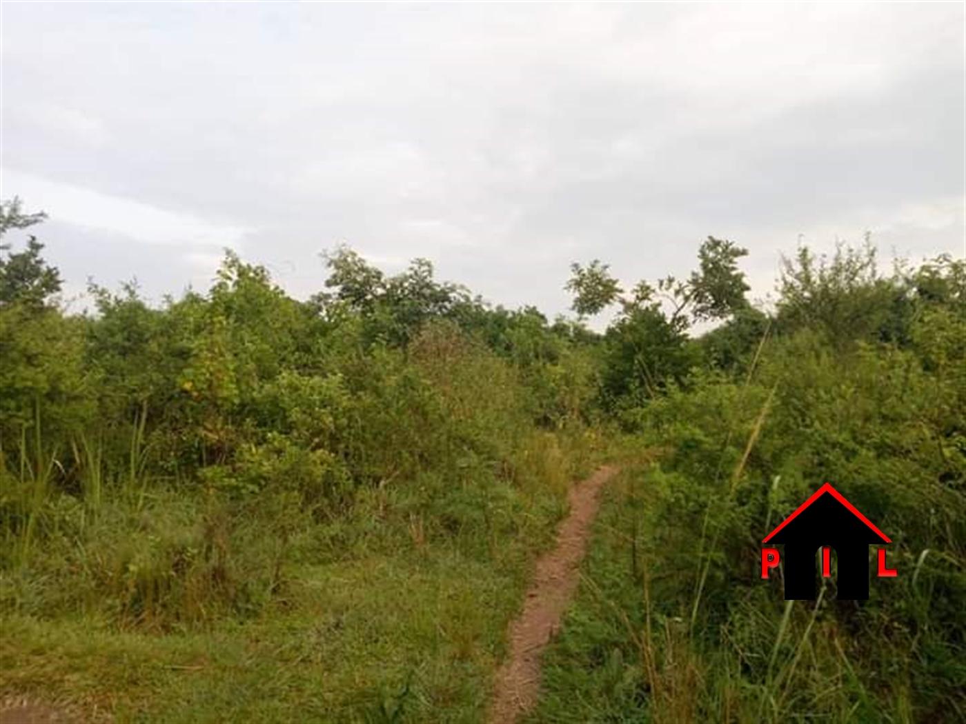 Agricultural Land for sale in Kikyusa Kalungu