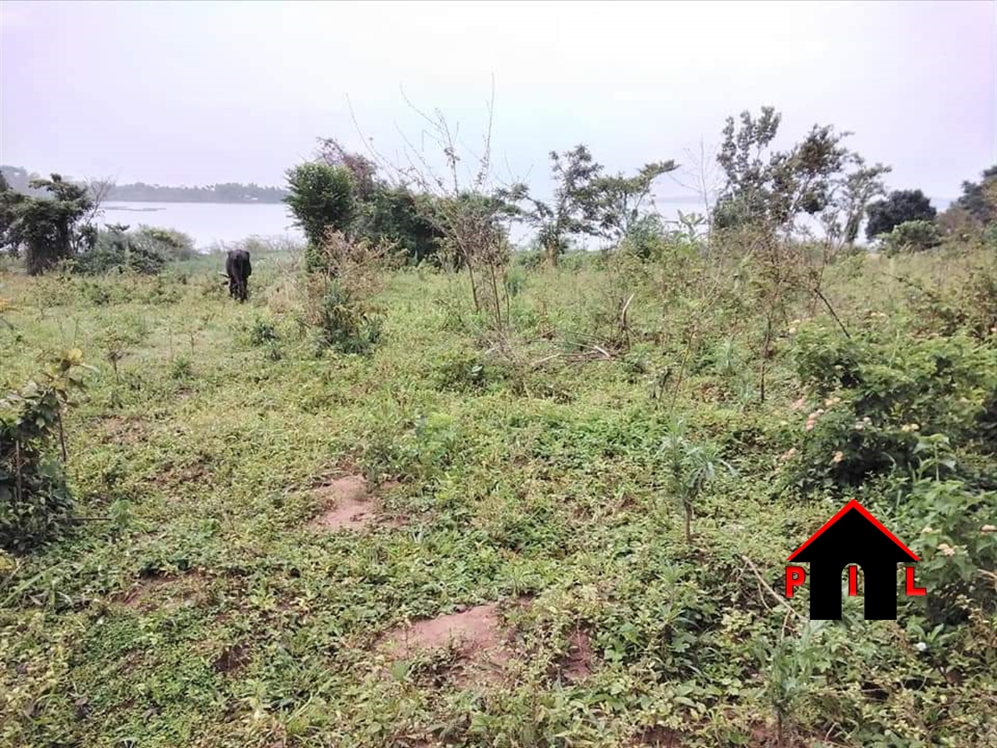 Agricultural Land for sale in Entebbe Bugiri