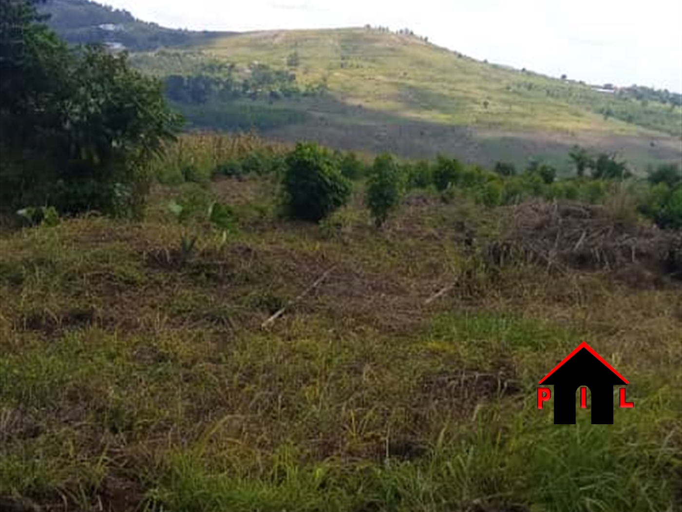 Agricultural Land for sale in Lukaya Kalungu