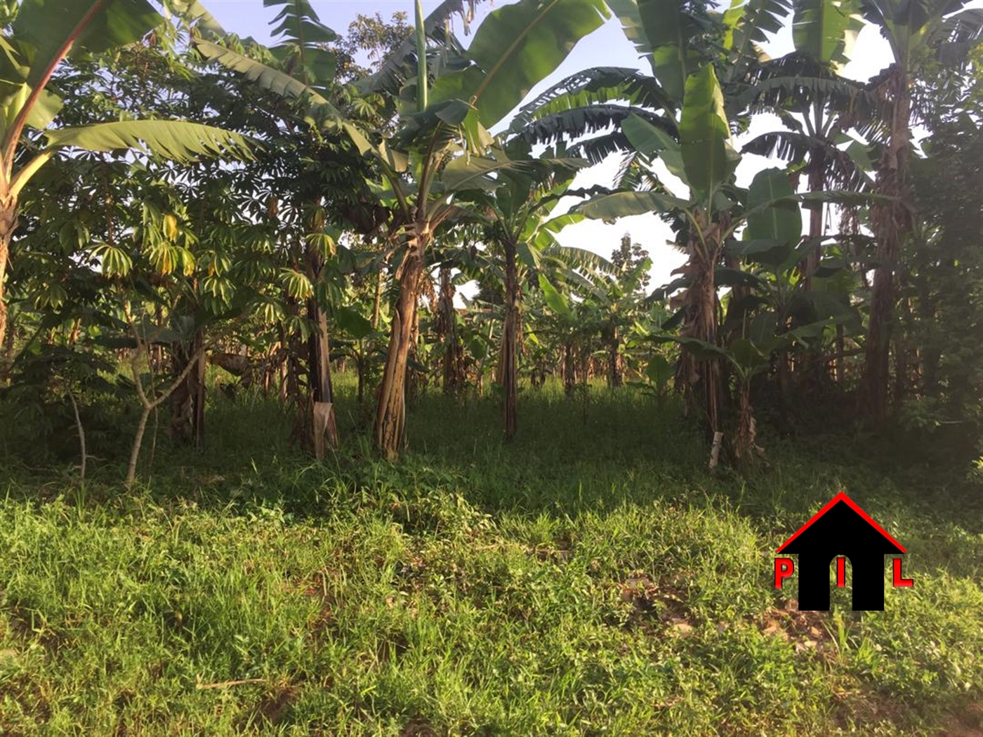 Agricultural Land for sale in Gomba Butambala
