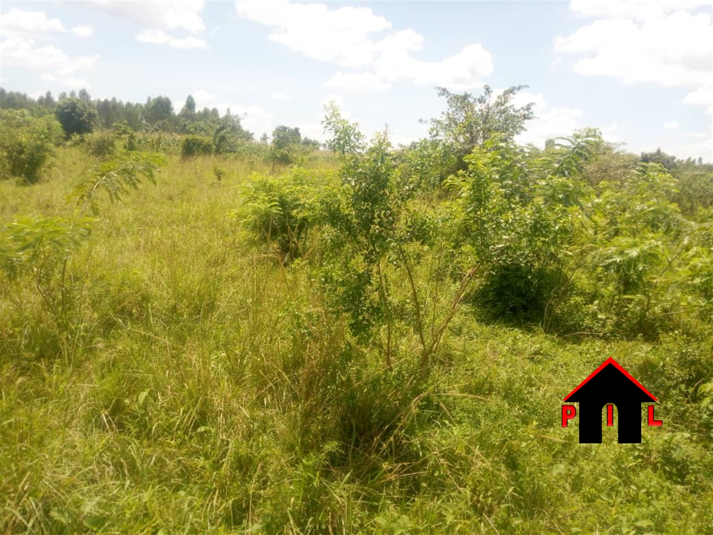 Agricultural Land for sale in Wamala Butambala