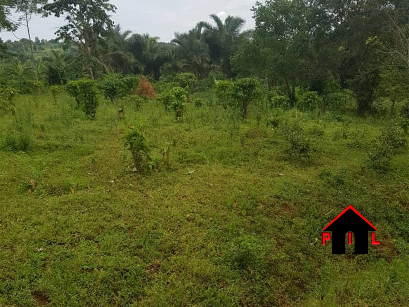 Agricultural Land for sale in Buikwe Mukono