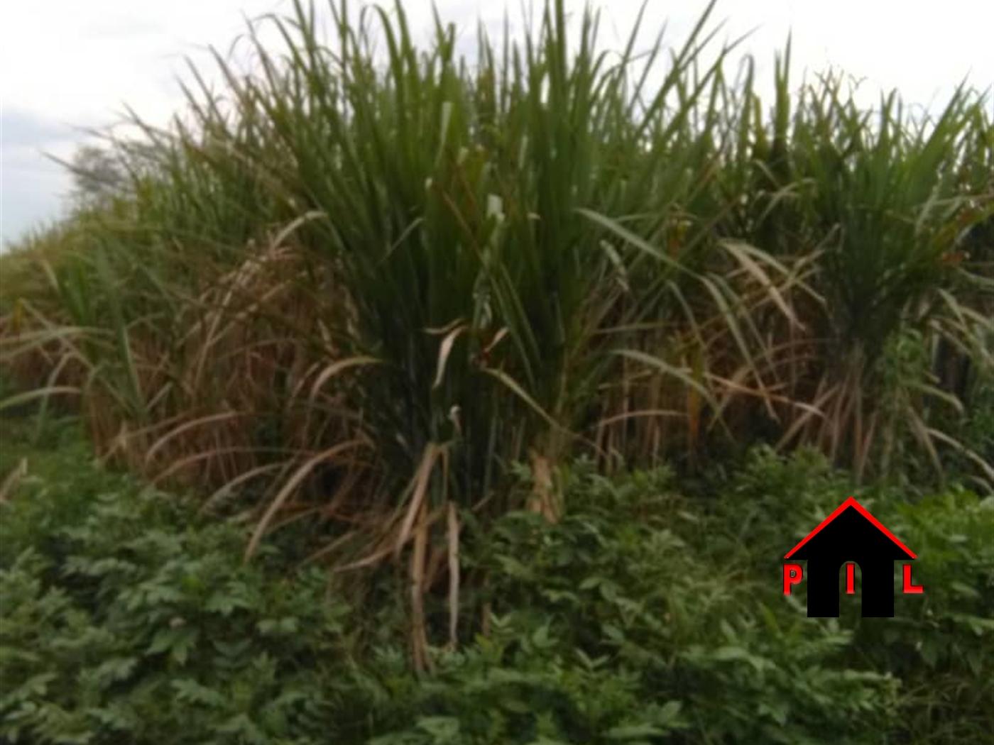 Agricultural Land for sale in Kapeka Kalungu