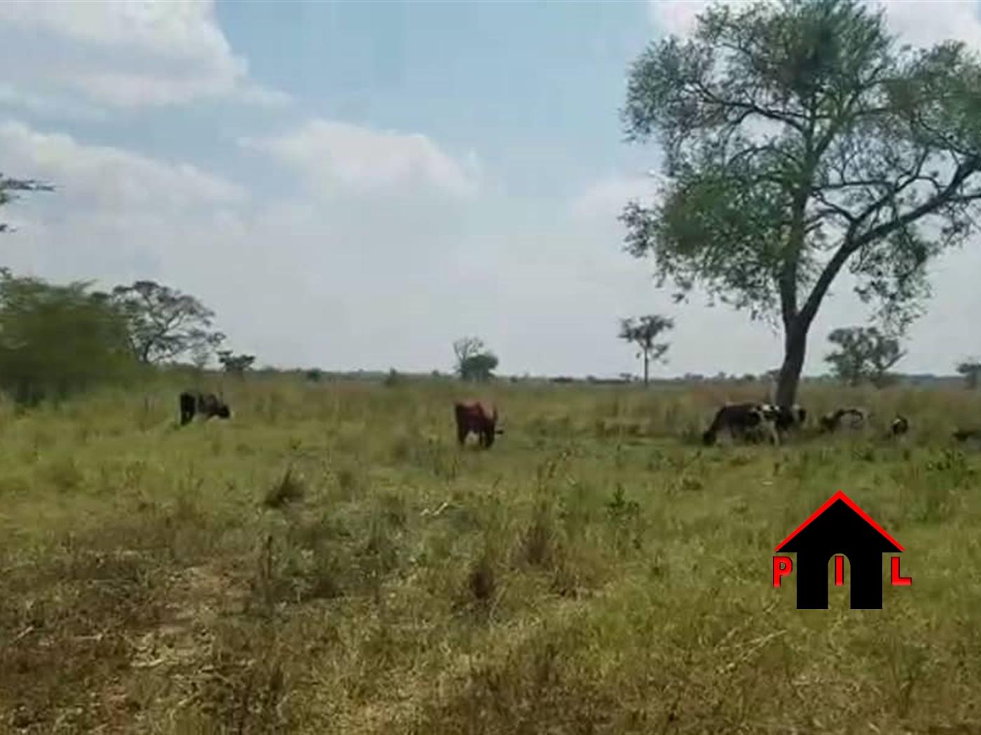 Residential Land for sale in Koona Wakiso