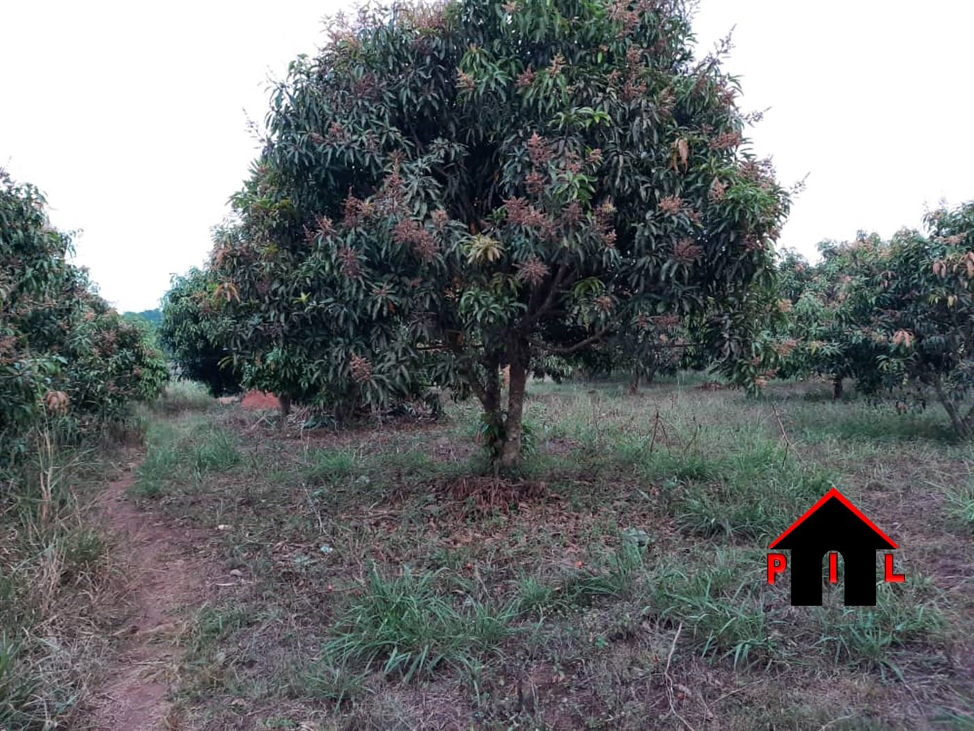 Agricultural Land for sale in Kyesiga Masaka