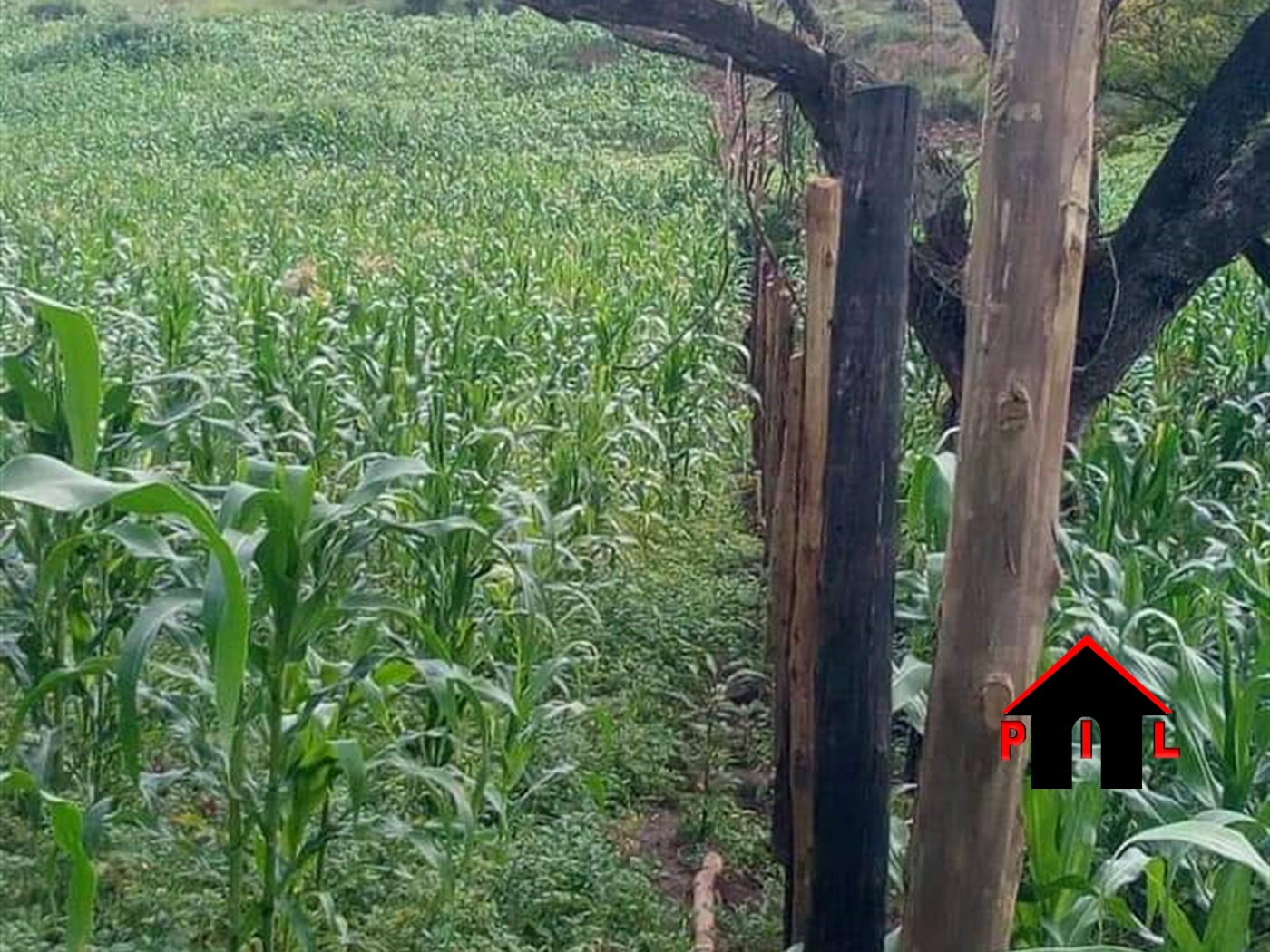 Agricultural Land for sale in Bukakata Masaka