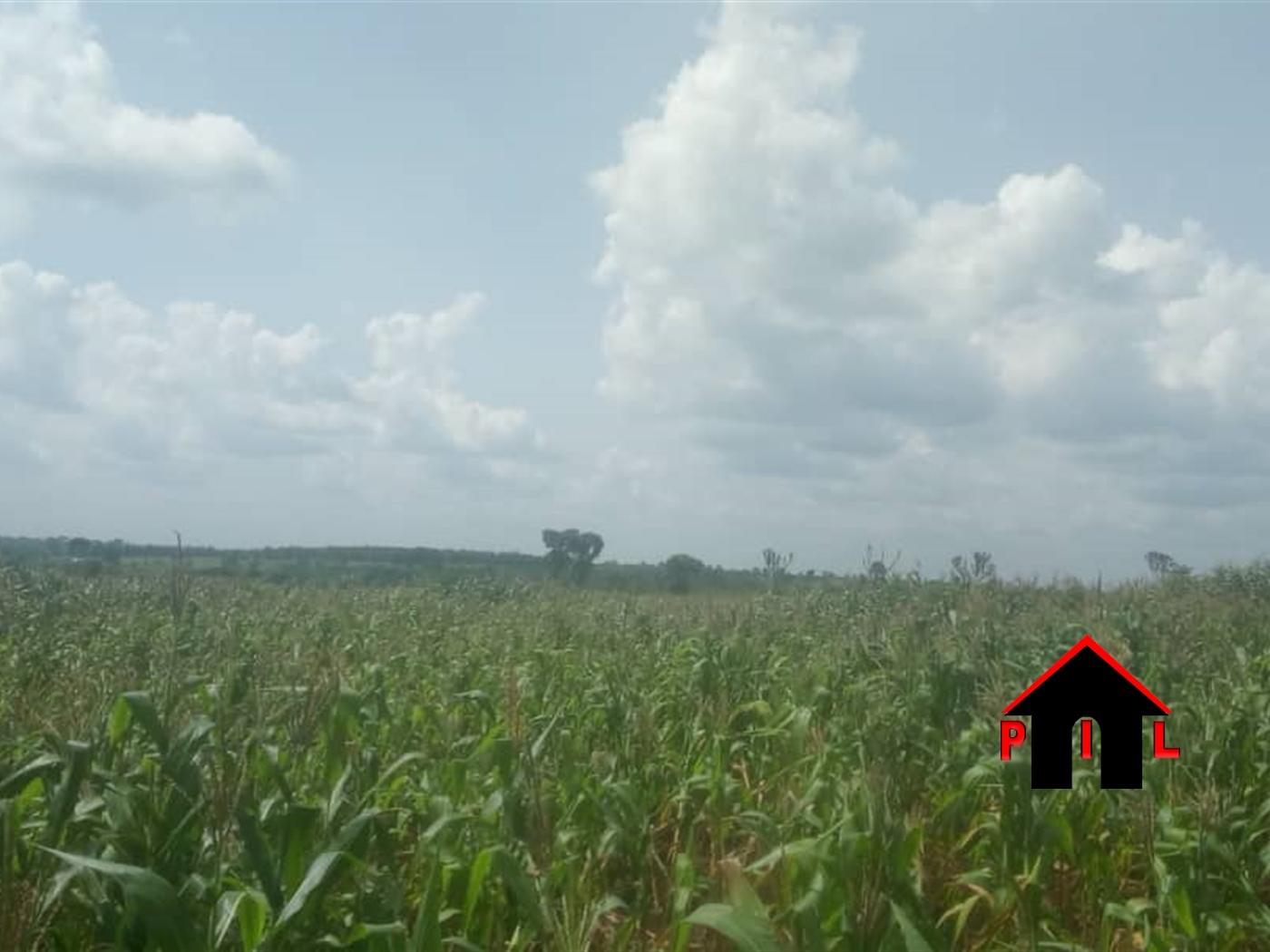 Agricultural Land for sale in Kilaga Masaka