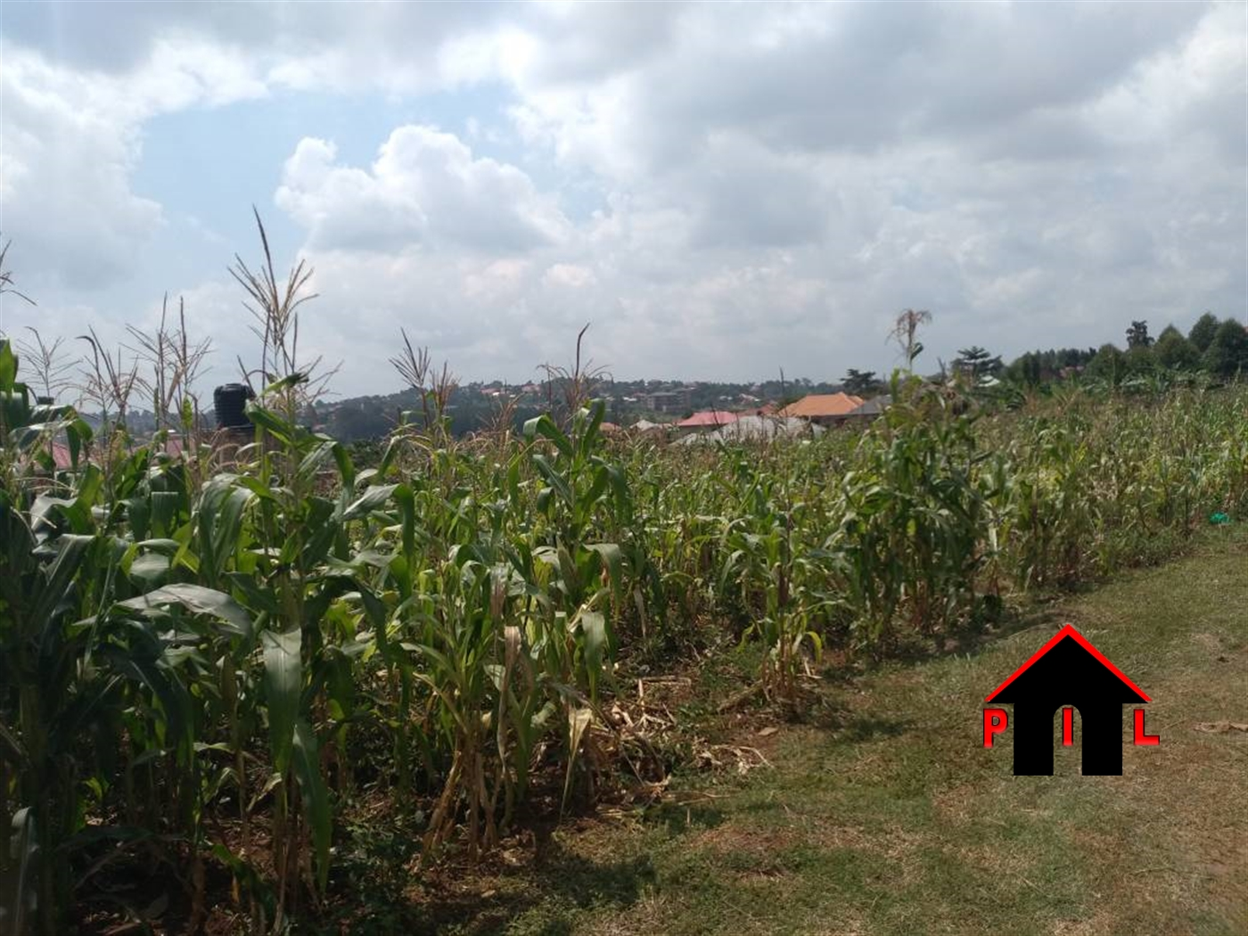 Agricultural Land for sale in Jezza Mityana
