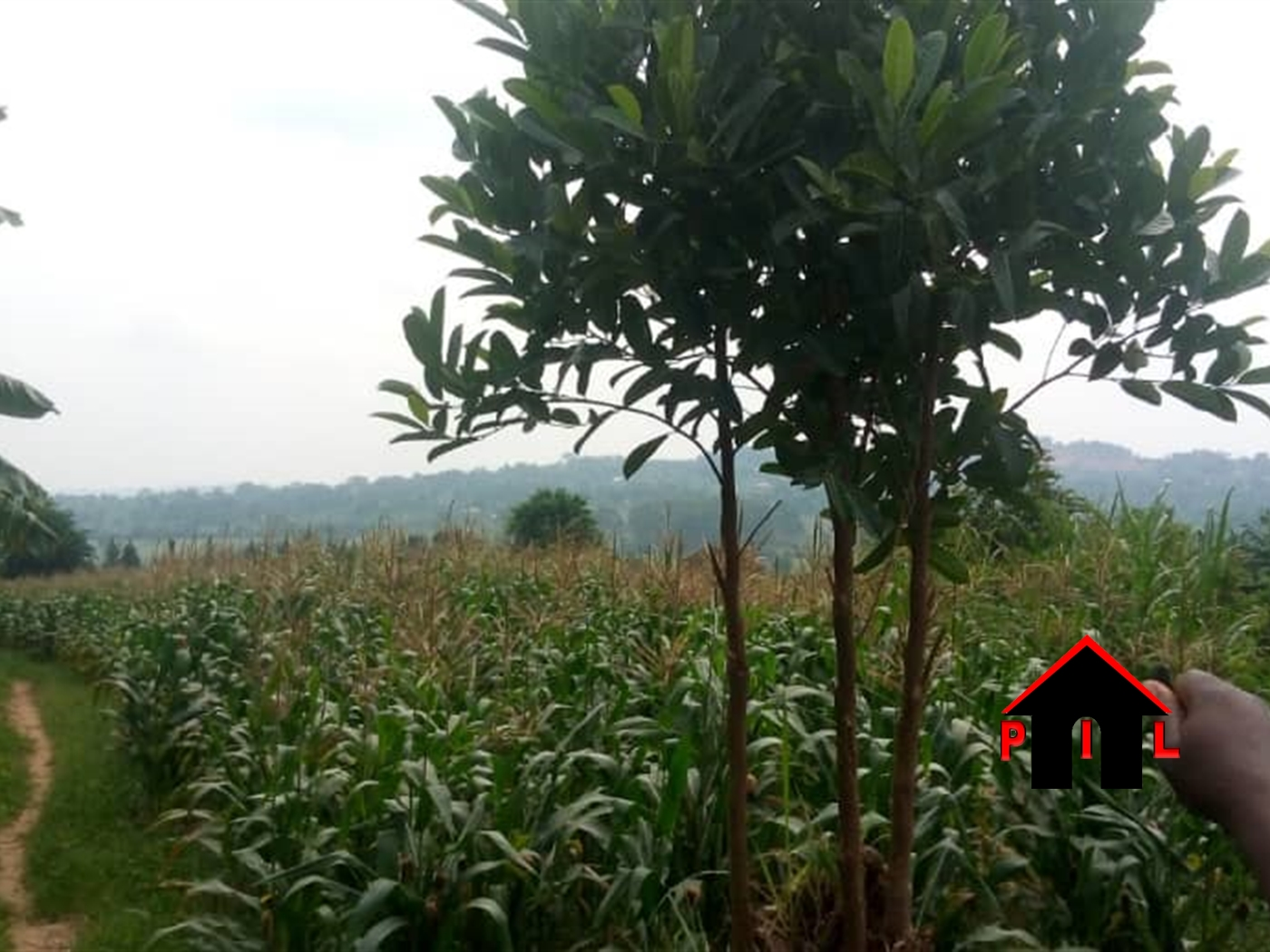 Agricultural Land for sale in Busiika Luwero
